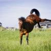 MD Anger - för arga hästar
