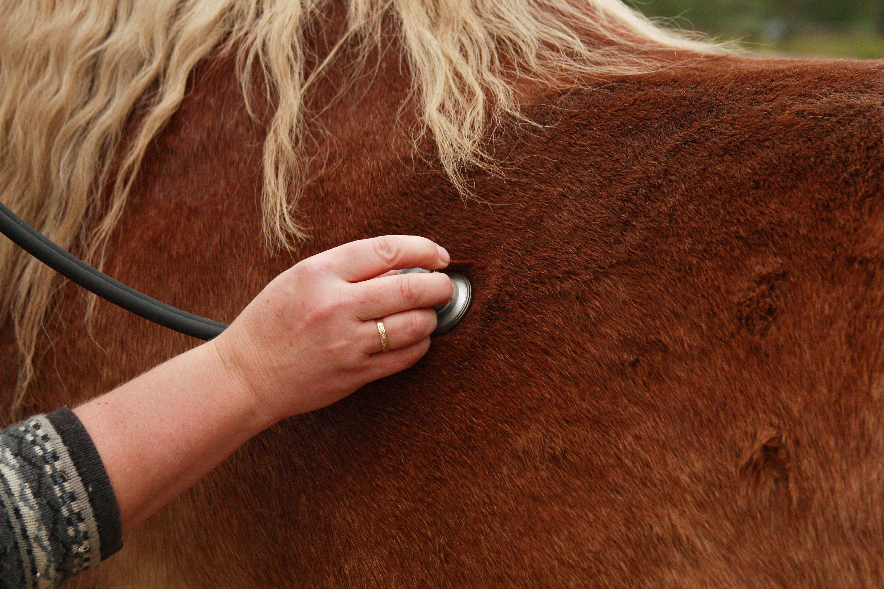 Immunoguarder fär hästens immunförsvar