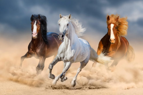 MD Mover - För hästar i rörelse