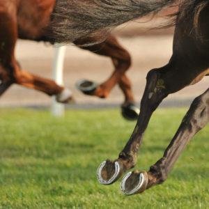 MD Tendon för hästens senor, ledband och gaffelband
