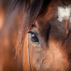 MD Lymph för hästens lymfsystem